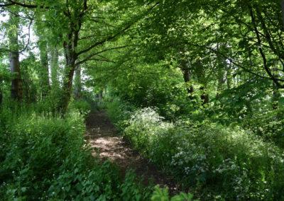 Le sentier de verdure en pleine nature